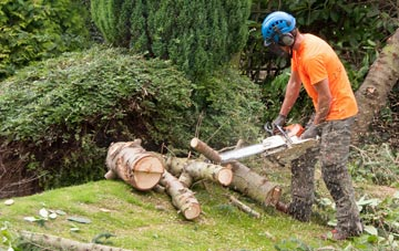additional services offered by Omagh tree surgeons