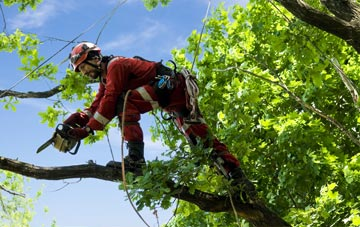 find trusted rated Omagh tree surgeons