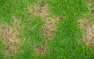 professional Omagh lawn care