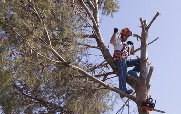reasons to consider Omagh tree surgery