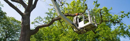Omagh tree surgery services