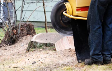 rated Omagh tree stump removal companies