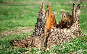 tree stump removal Omagh
