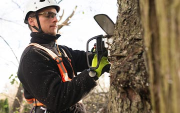 Omagh tree surgery costs