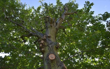 what is Omagh tree surgery?