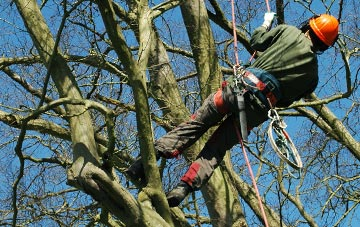 tree surgery Omagh