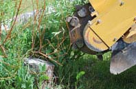 free Omagh tree stump grinding quotes
