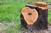 free Omagh tree stump removal quotes