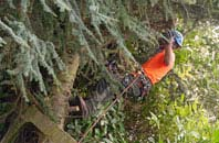 free Omagh tree surgery quotes